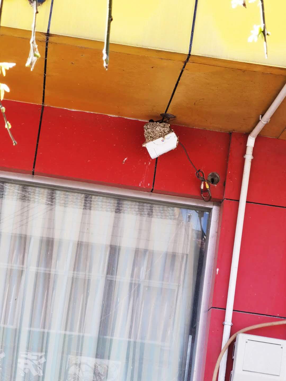 屋檐下的燕子又回来了 小燕子穿花衣年年春天来这里